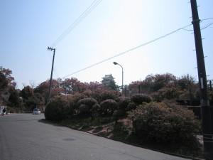花見 011